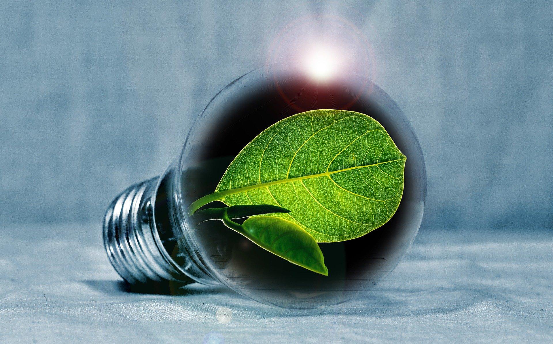 Für Nachhaltigkeit und Innovation: Grünes Konzept für Gründerwettbewerb im Landkreis